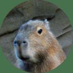 capaybara
