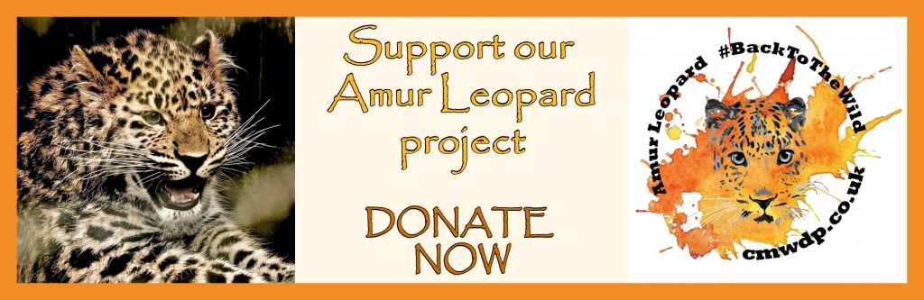 support our Amur Leopard Project