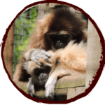 Sponsor our Lar Gibbons