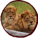 Sponsor Leo & Lenny