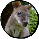 Sponsor our Wallabies